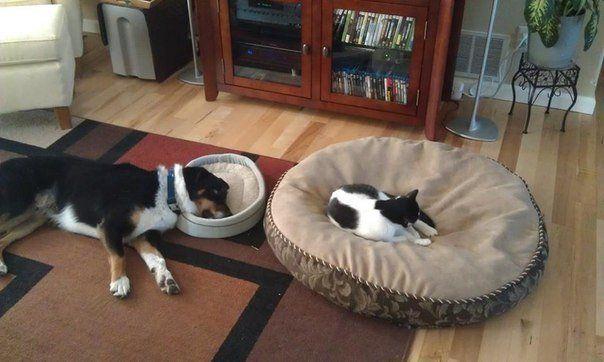бескаркасная мебель для кота и собаки